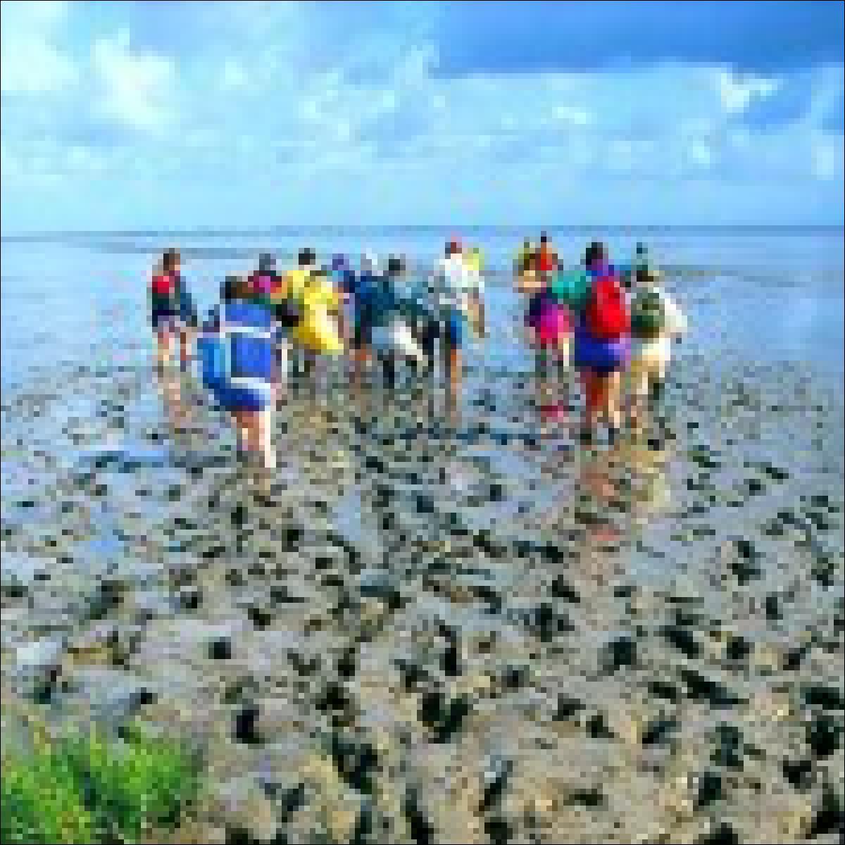 Erlebnis Wattenmeer auf Ihrer Klassenfahrt an die Nordsee.