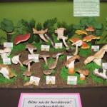 Pilzmuseum in Reinhardtsgrimma